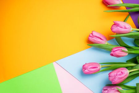 Beautiful pink tulips on multicolored yellow, blue paper backgrounds with copy space. Spring, summer, flowers, color concept