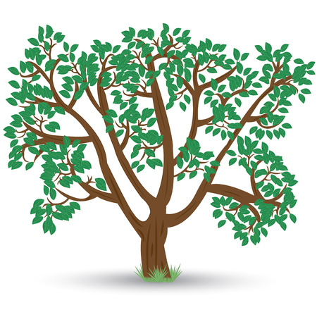 old tree with green leaves and rough bark with shadow on white background. Vector illustration