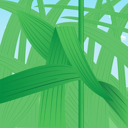 Dense thickets of grass close-up against the sky. Vector illustration Illustration