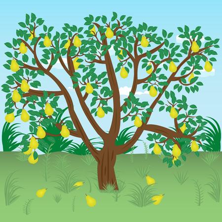 Oude peerboom met rijpe peren op een weiland. Vector illustratie