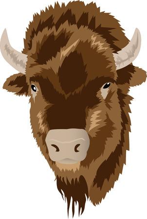 untamed: Vector illustration of a bison head