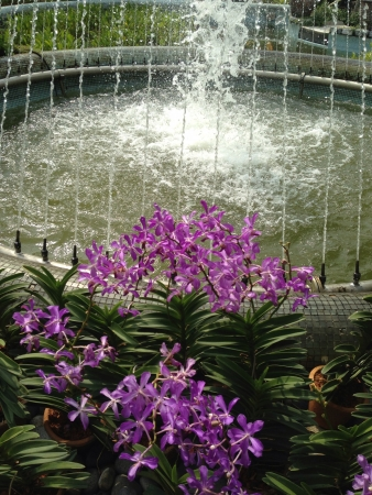 water feature: Man made water feature with flowers