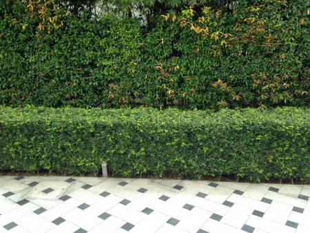 neatly: Neatly trimmed hedge Stock Photo