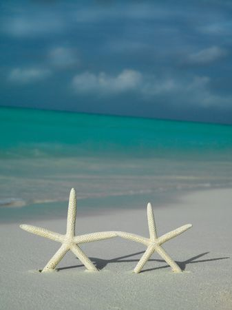 two object: two starfishs on the beach