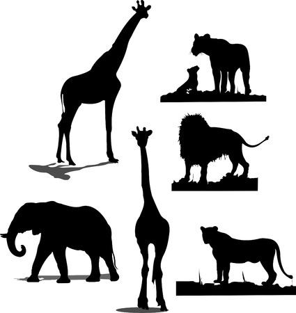 silhouettes elephants: Siluetas de animales africanos. Siluetas en blanco y negro