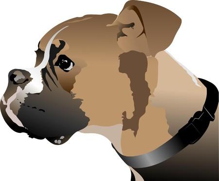 tete chien: T�te de chien Boxer.   Illustration