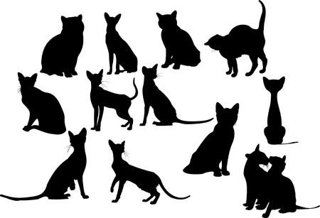 silueta gato negro: Ilustración de siluetas de doce gatos  Vectores