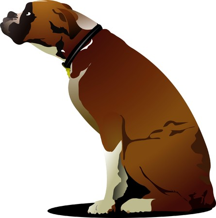boxer dog: Sitting cute boxer dog.  illustration Illustration