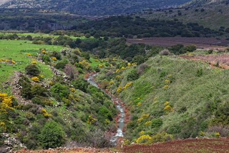 Wild Landscape With Golan Heights; Israel photo