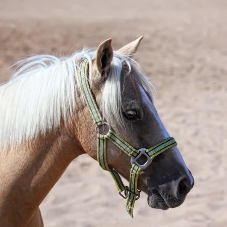 contemporaneous: horse portrait close up