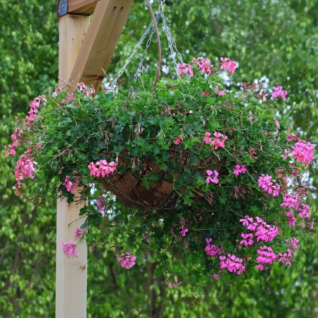 Hanging basket of flowers  photo