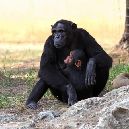 Two monkeys in a zoo Stock Photo - 13603452