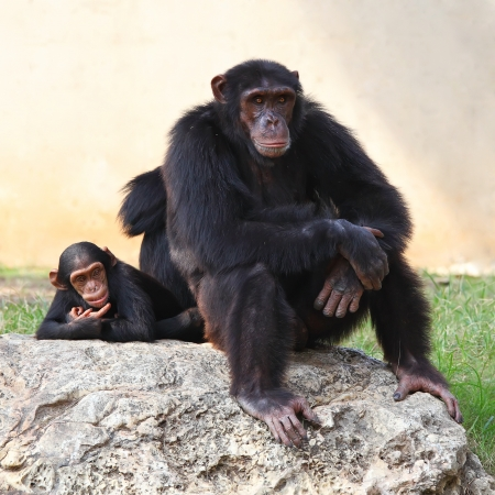 Two monkeys sitting on a rock at the zoo   photo