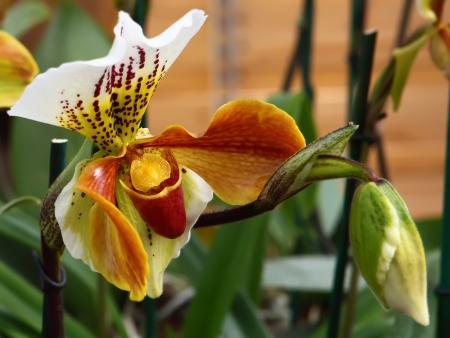 utopia: Exotic tropical  flower in the park Utopia, Israel.