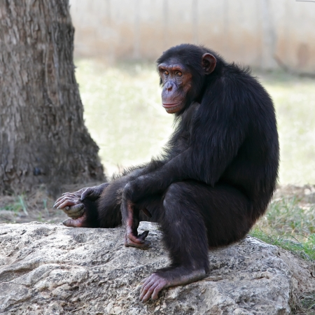 monkey sitting on a rock at the zoo   Stock Photo - 14440500