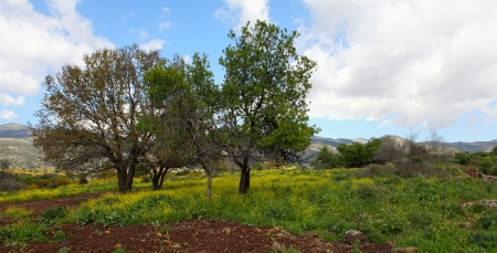 Wild Landscape With Golan Heights,Israel