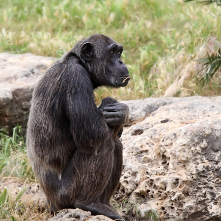 monkey sitting on a rock at the zoo Stock Photo - 15640992