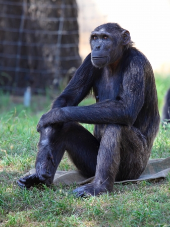 monkey sitting on a rock at the zoo. Stock Photo - 15706254