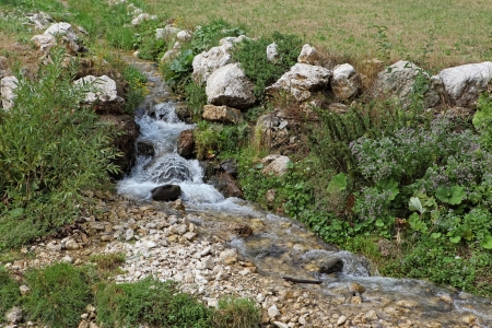 stream in forest,Beginning of the river  Stock Photo - 15706272