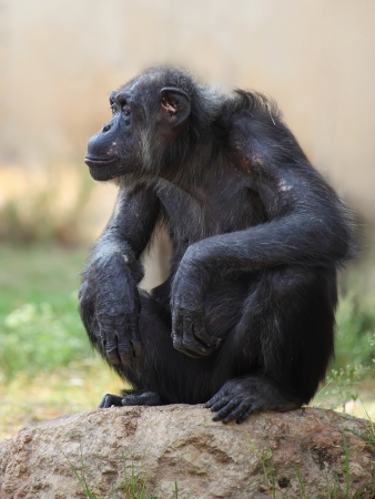 monkey sitting on a rock Stock Photo - 15828339