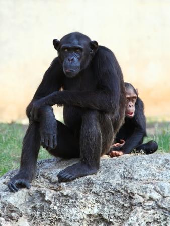 Two monkeys sitting on a rock  Stock Photo - 19450440