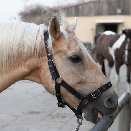 contemporaneous: horse portrait