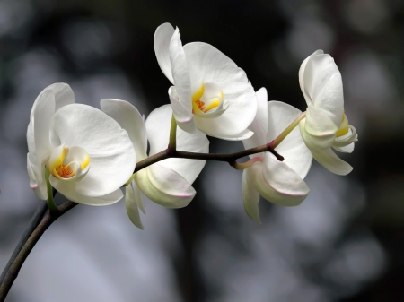 Beautiful white orchid  Stock fotó