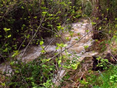 banias: River Hermon ,Banias Nature Reserve in Golan Heights,israel