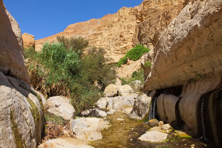 rocks, streams and small waterfalls, water and life in the arid desert - Ein Gedi nature reserve off the coast of the Dead Sea ,Israel photo