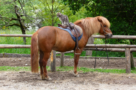 fencepost: horse with a long haired and cat sitting on his back Stock Photo