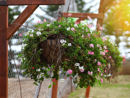 cranesbill: Hanging basket of flowers Stock Photo
