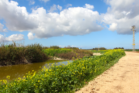 nahal: A view of Nahal Alexander (Alexander stream) nature reserve. Israel Stock Photo