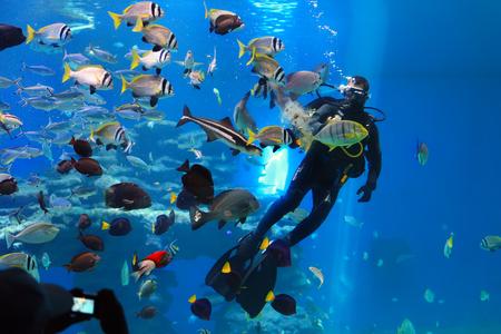 EILAT, ISRAEL - 04 DE AGOSTO DE 2016: el zambullidor está alimentando pescados en el acuario del tiburón de la piscina del acuario coralino del observatorio subacuático del mundo en Eilat, Israel. Foto de archivo - 78215051