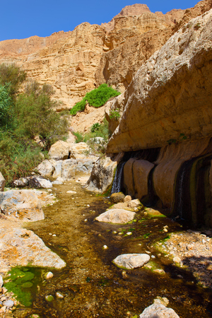 rocks, streams and small waterfalls, water and life in the arid desert - Ein Gedi nature reserve off the coast of the Dead Sea ,Israel