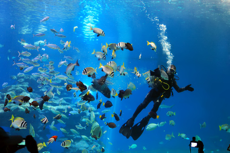 EILAT, ISRAEL - AUGUST 04 2016: diver is feeding fishes in the Shark Pool of Coral World Underwater Observatory aquarium in Eilat, Israel.