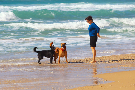 Mature Woman  playing with her dogs on the beach Stock Photo