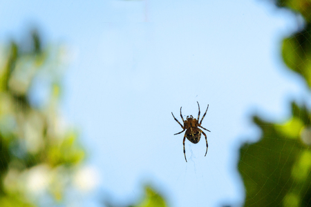 Spider on web waiting for prey. hunter. summer concept. Stock Photo