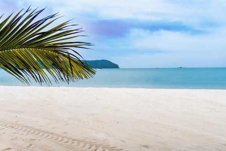 Palm leaf branch over a tropical beach