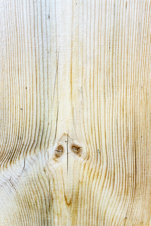 Texture of wood pattern background, texture of the surface of cut tree