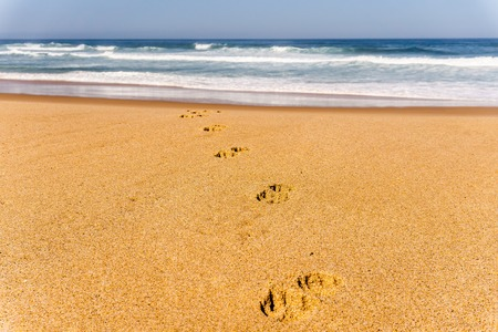 Dog footprints track on sandy beach of Atlantic ocean shore in Portugal 写真素材