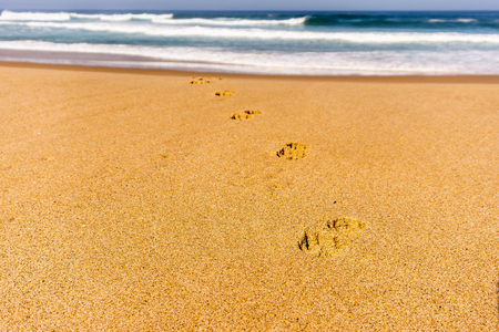 Dog footprints track on sandy beach of Atlantic ocean shore in Portugal, summer holiday and vacation on sea with pets.