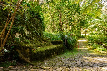 Sintra garden near the Pena palace in Sintra with stone bench covered moss, Portugal