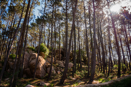 Sun Rays shining through branches in the forest with rock formation during summer day 写真素材