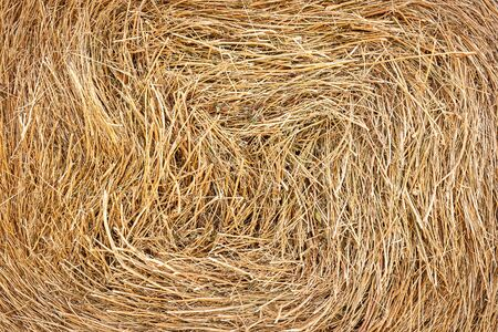 Closeup of golden hay roll circular haystack showing straw texture 版權商用圖片