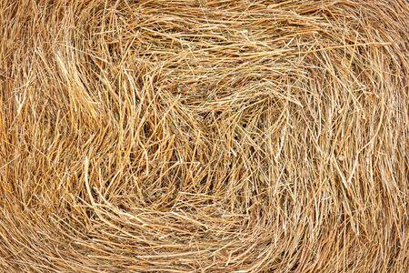 Closeup of golden hay roll circular haystack showing straw texture Stok Fotoğraf