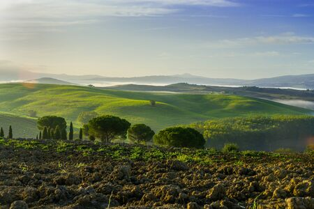 Beautiful foggy landscape in Tuscany - wave hills, green grass and morning fog. ItalyTuscany landscape on the hills of Val d'Orcia