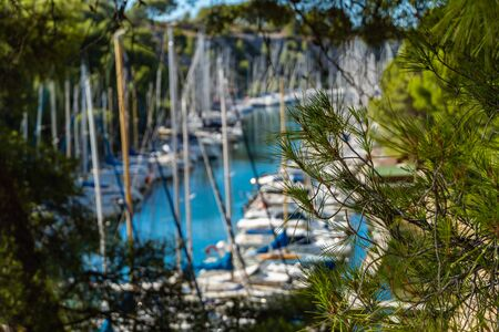 Pine branch on background Calanque de Port Miou - fjord near Cassis Village in Provence in France