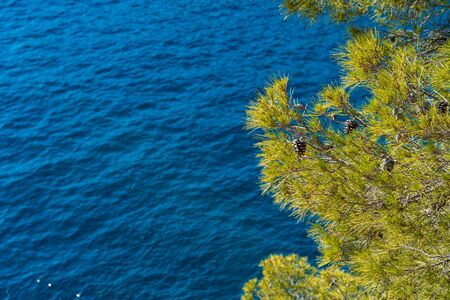Nature Background with Pine tree in front of blue turquoise water of calanque de sormiou, calanque national park, south france, marseille, mediterranean sea, cassis Фото со стока
