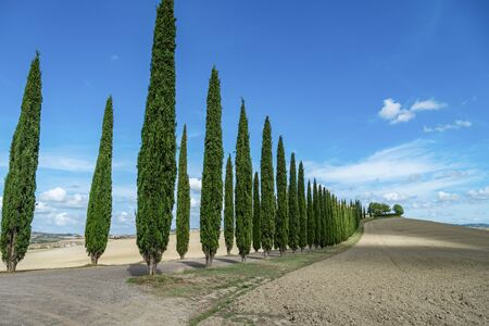 Cypress Trees rows on road, beautiful landscape of Tuscany, Italy, Europe.