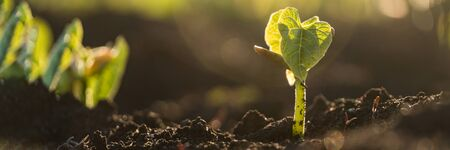 Green sprout growing from ground, new life or start or beginning concept. Wide banner Reklamní fotografie